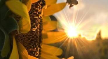 Όταν ακούς μια μέλισσα να ζουζουνίζει, να θυμάσαι…